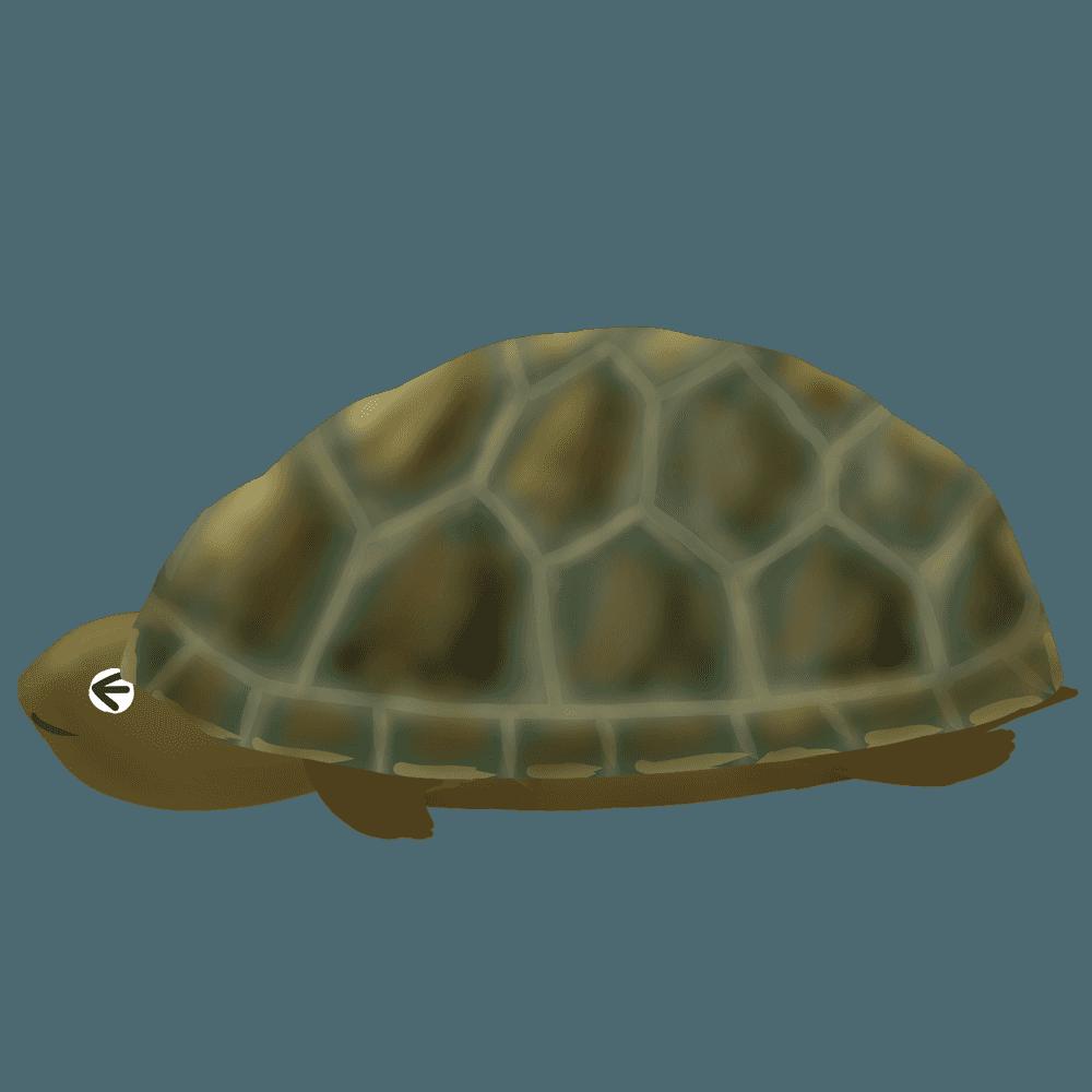 びびるリクガメのイラスト