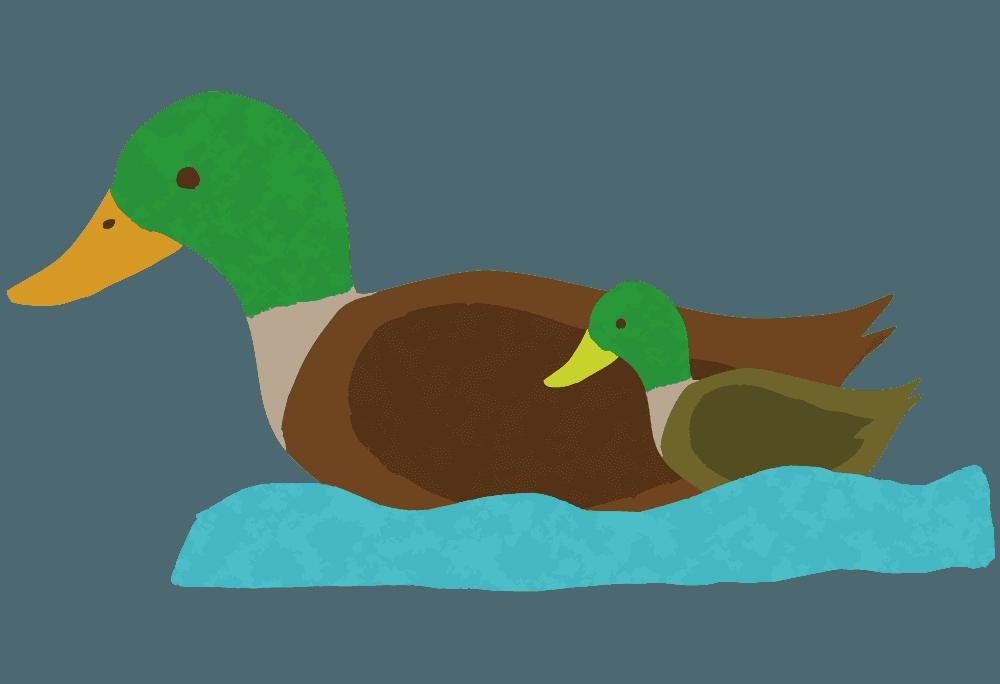 水辺を泳ぐ親子のカモイラスト