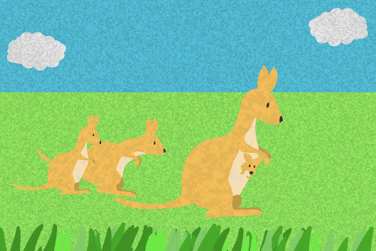 3匹のカンガルーの親子のイラスト