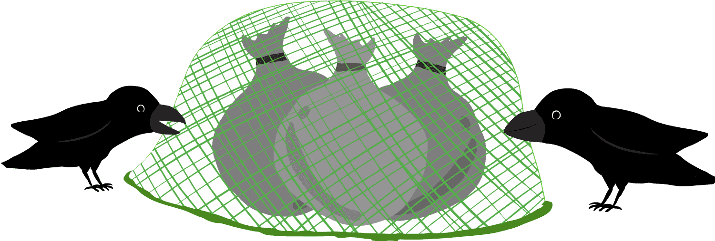 カラス対策のネットを突っつくカラスのイラスト
