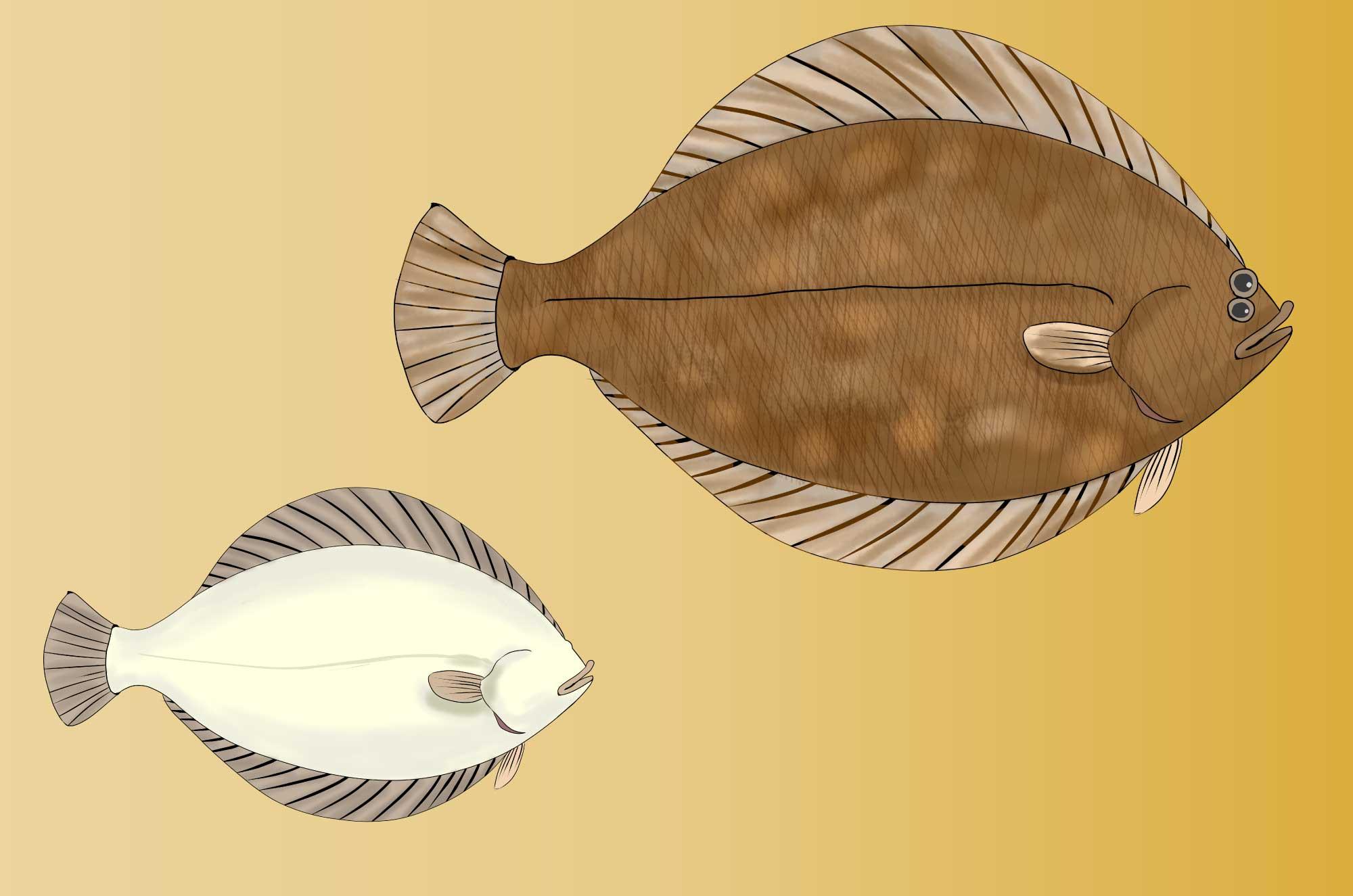 カレイのイラスト 手書き白黒の魚無料素材 チコデザ