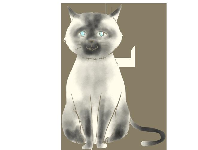 手書きのシャム猫のイラスト