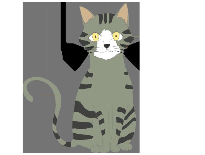 シバトラ猫のイラスト