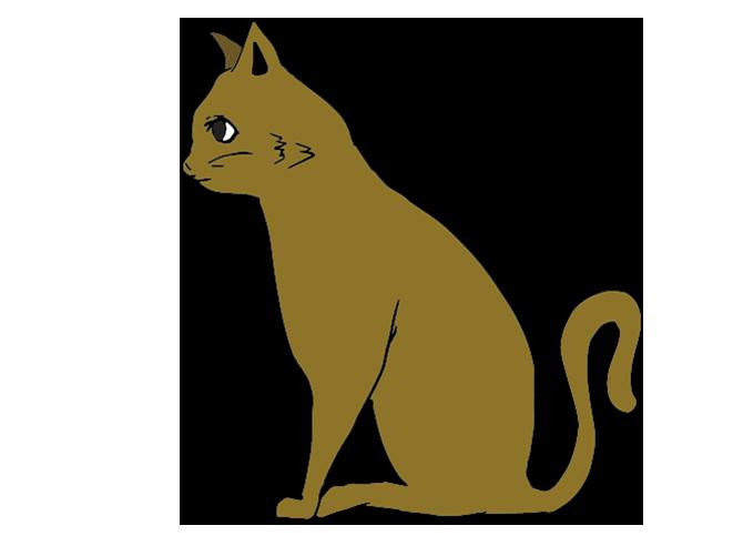 座る茶色猫