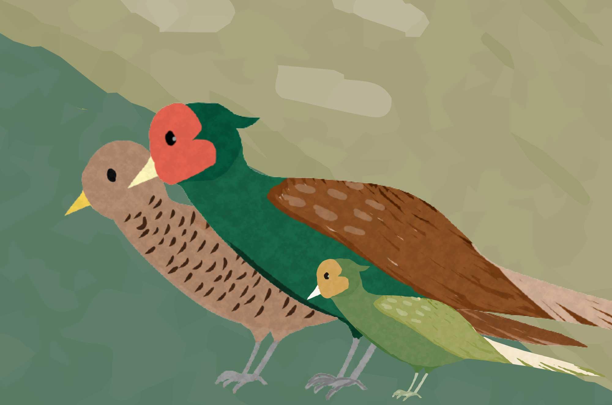 可愛いキジのイラスト - 日本の手書きの野鳥無料素材