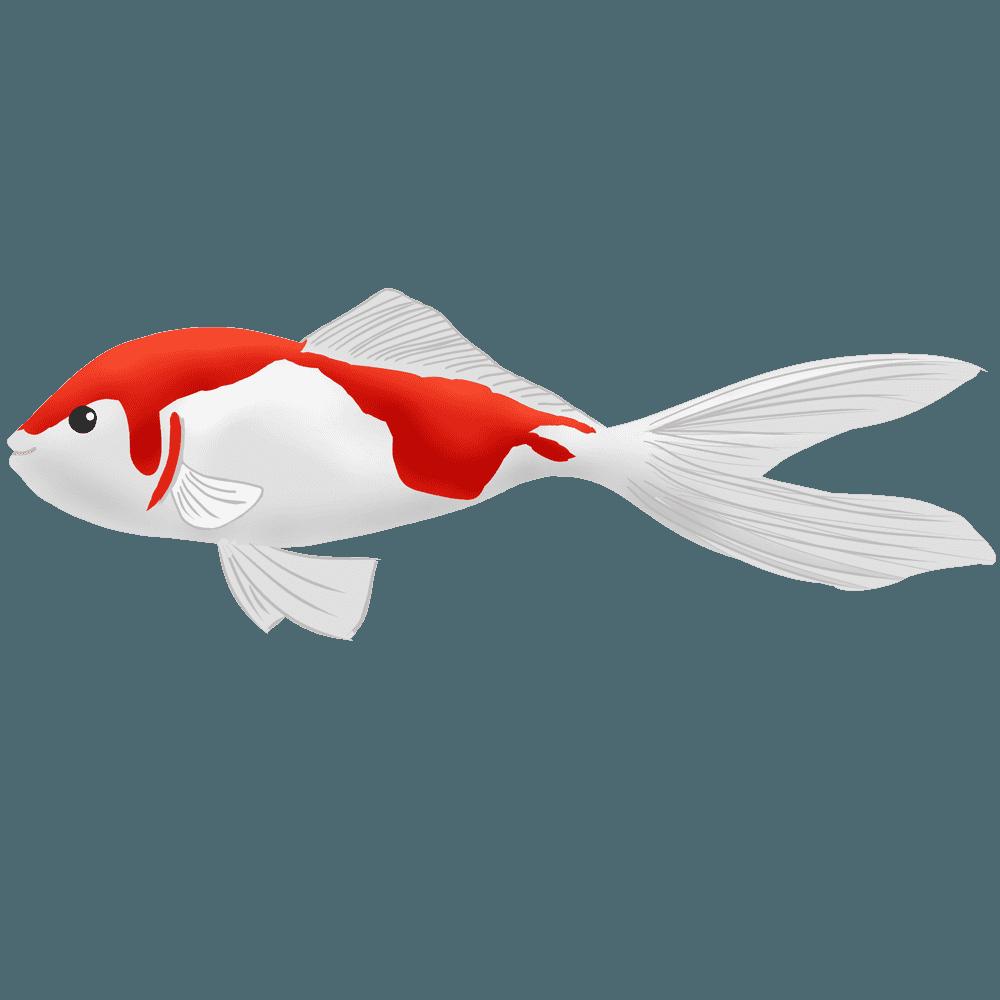 金魚コメットのイラスト