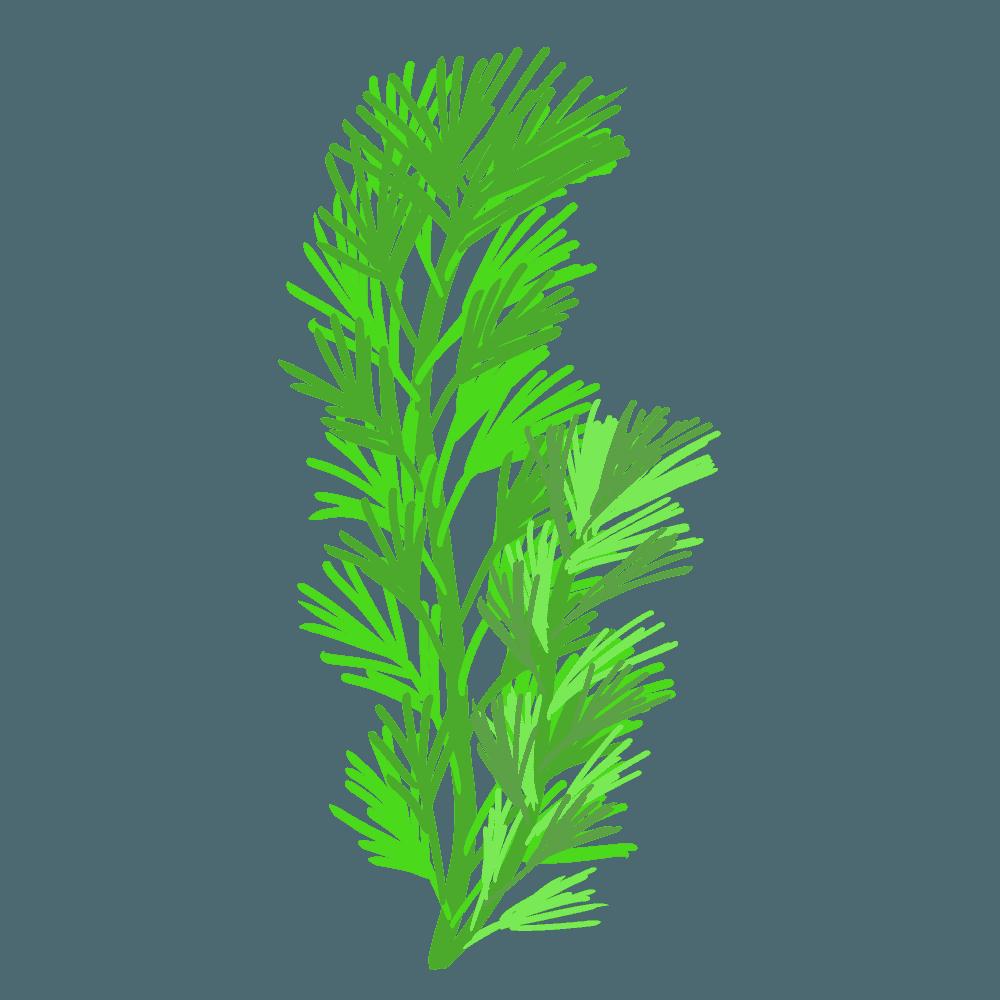 水草カボンバ1本のイラスト