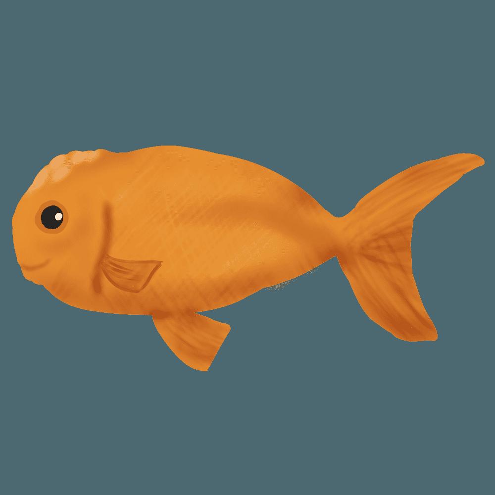 金魚ランチュウイラスト