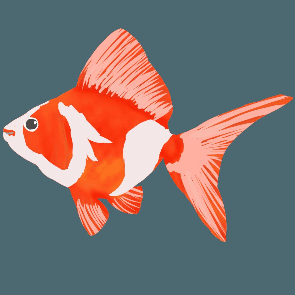 金魚更紗リュウキンイラスト