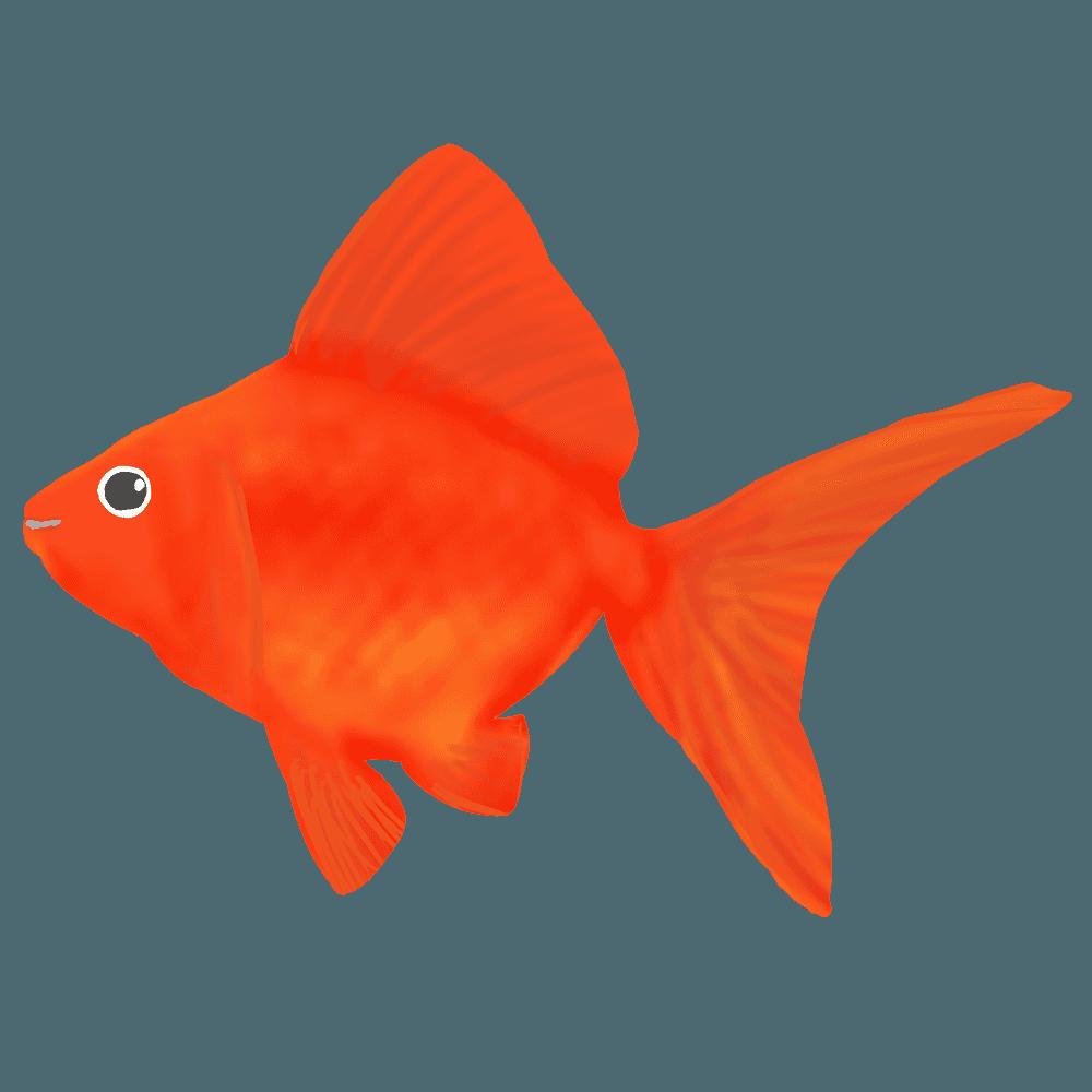 金魚流金イラスト