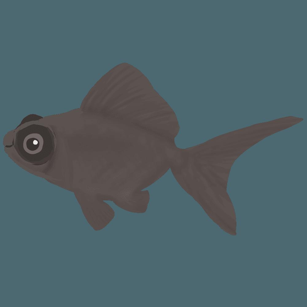 金魚黒デメキンイラスト