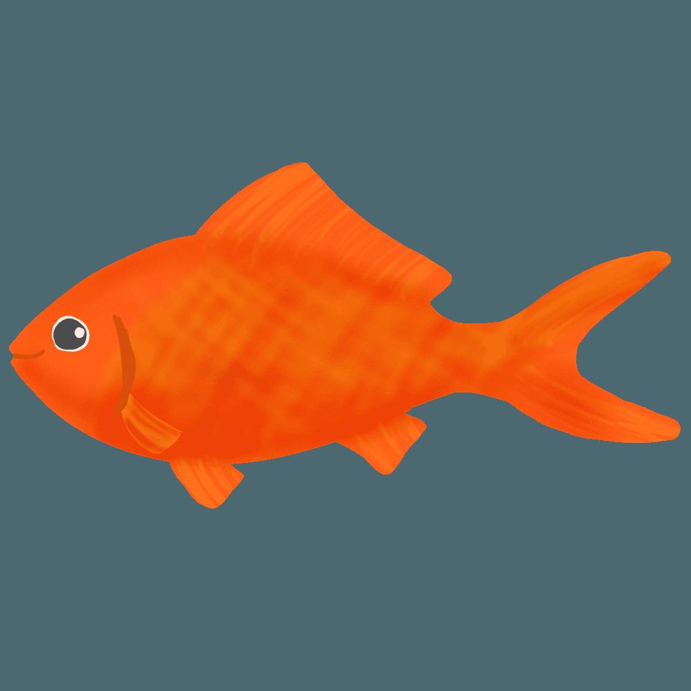 金魚和金イラスト