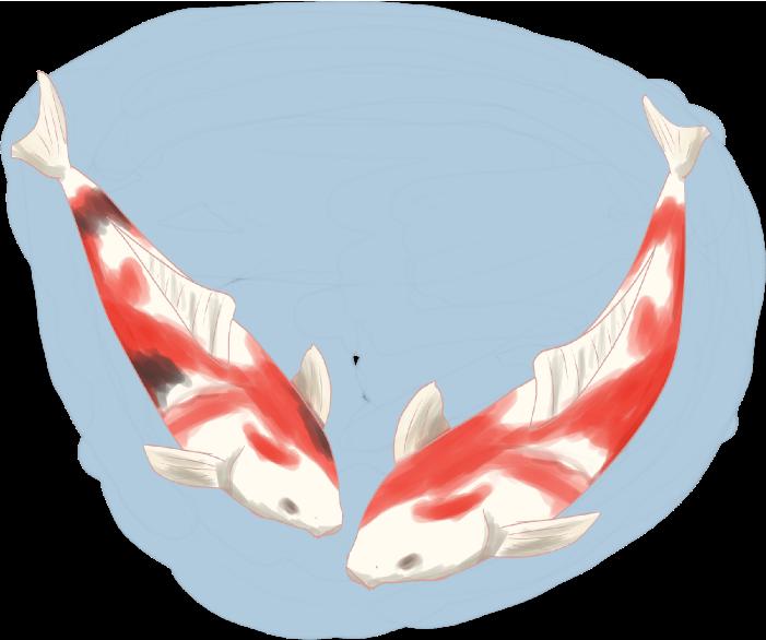 池で優雅に泳ぐ鯉のイラスト