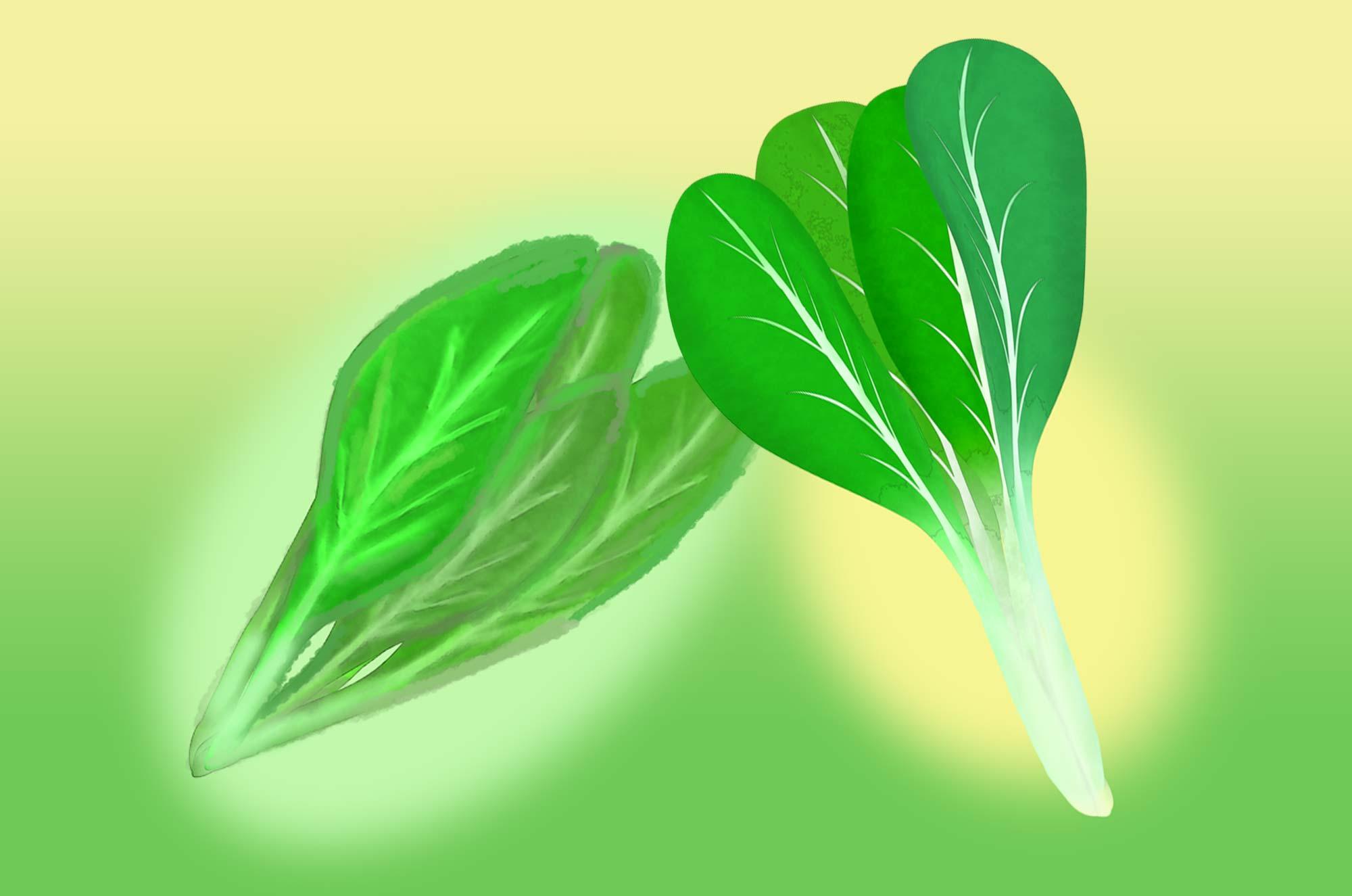 小松菜のイラスト - 新鮮野菜の手書きの無料素材