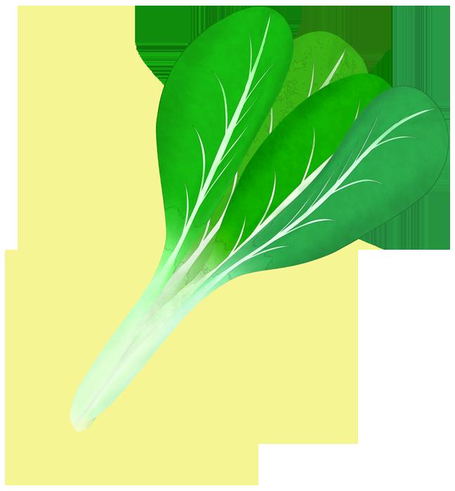 小松菜の挿絵イラスト