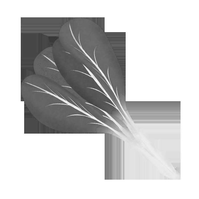 白黒印刷用の小松菜のイラスト