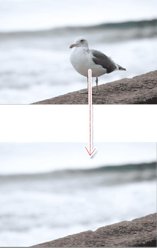 フォトショップのコンテンツに応じる機能で消すカモメ