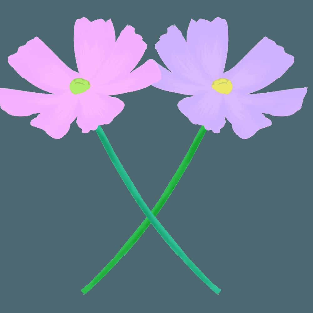 紫系のコスモスイラスト