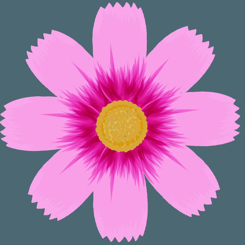 ピンクのコスモス花のみイラスト