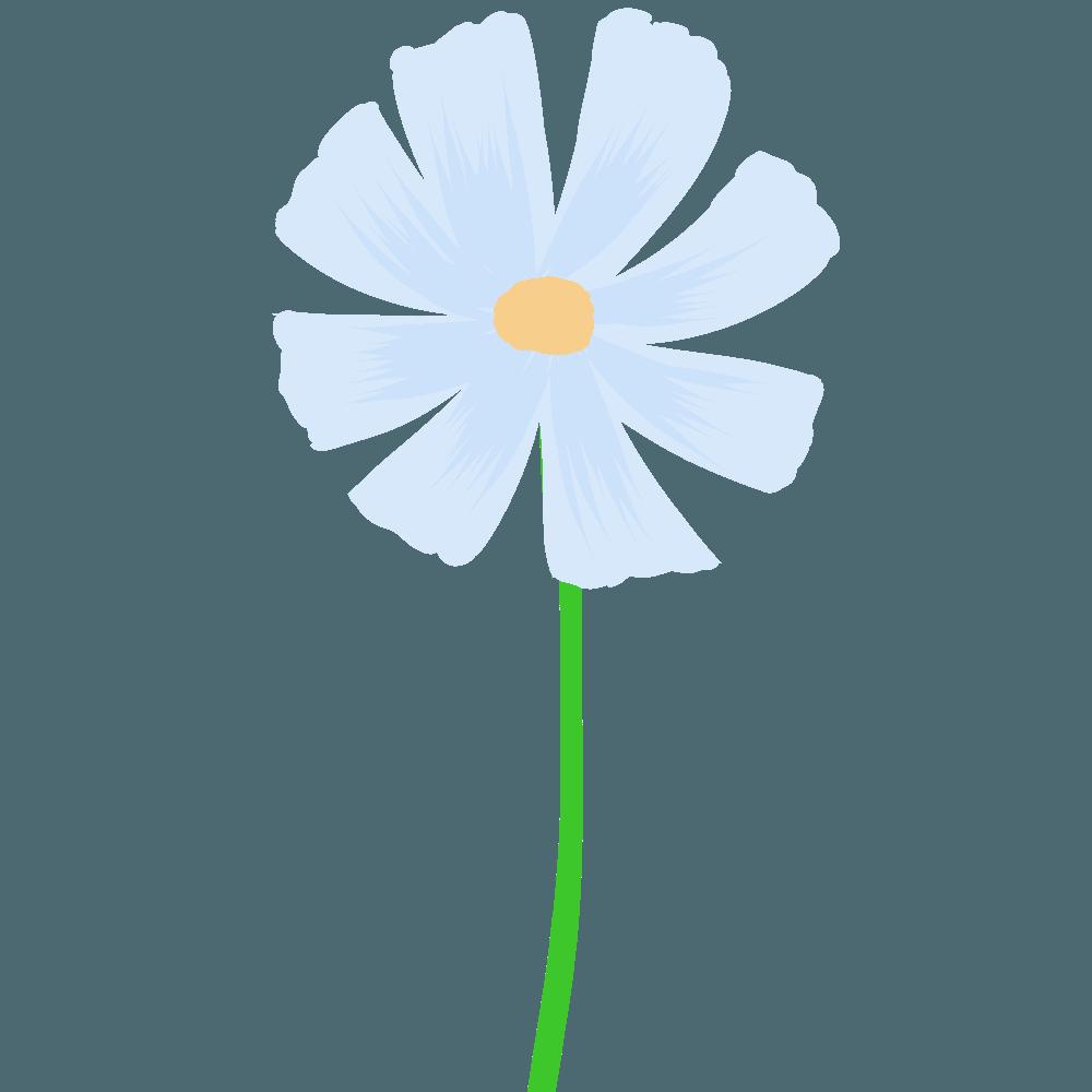 水彩コスモス薄い青イラスト