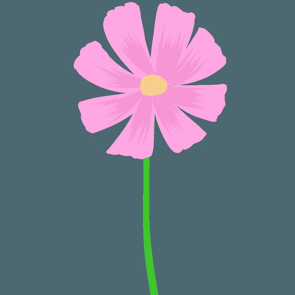 水彩コスモスピンクイラスト