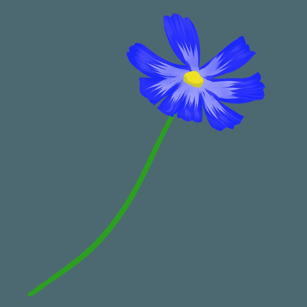 可愛い青いコスモスイラスト