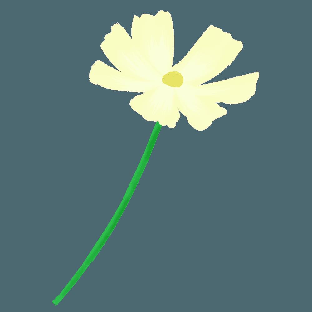 黄色いコスモス一本のイラスト