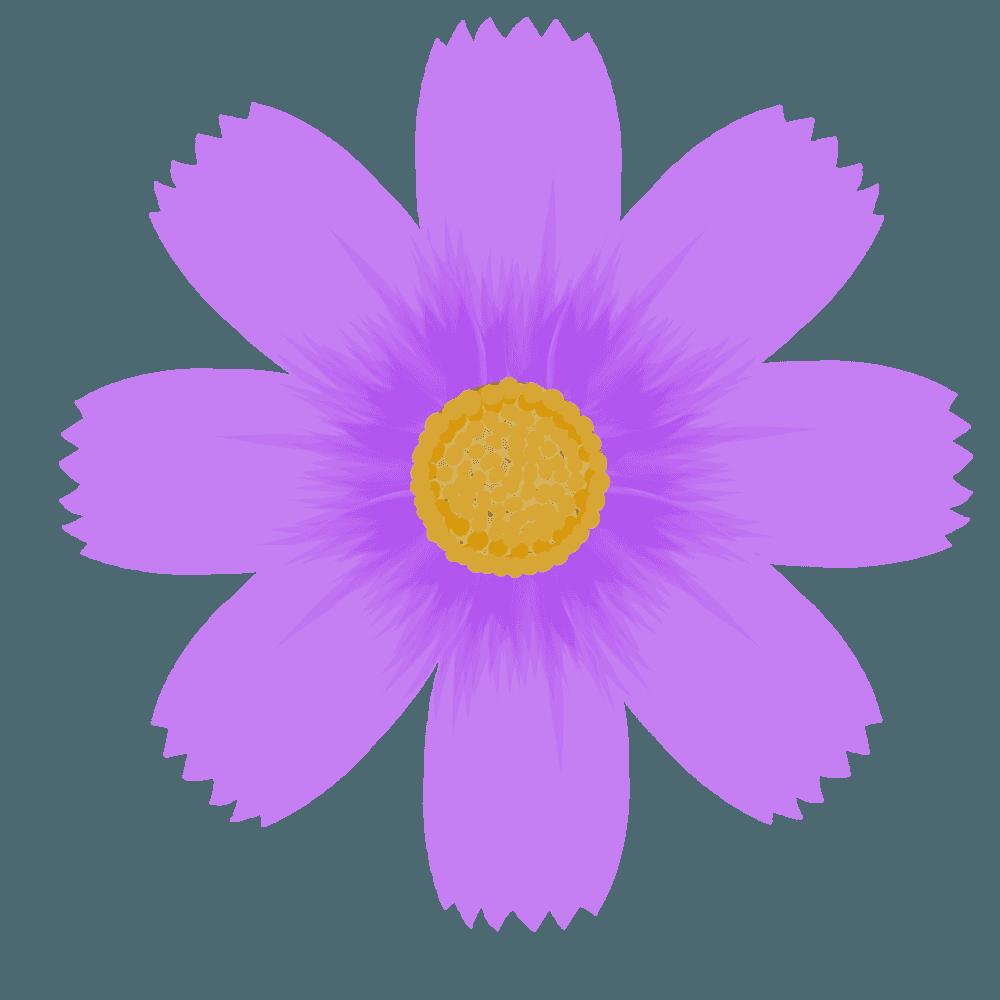 紫のコスモスの花イラスト