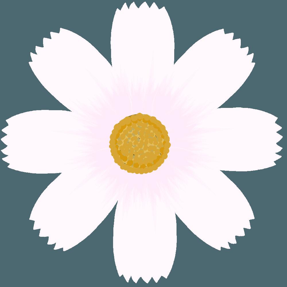 白いコスモスの花のイラスト