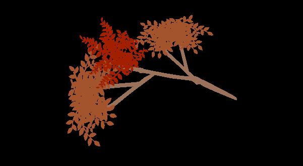 紅葉の枝のイラスト1