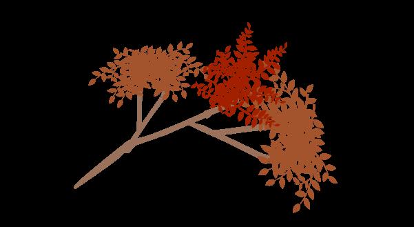 紅葉の枝のイラスト2