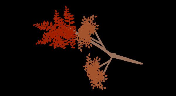 紅葉の枝のイラスト3