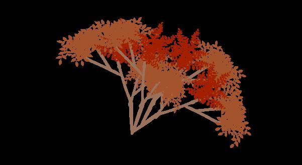 紅葉の枝のイラスト4