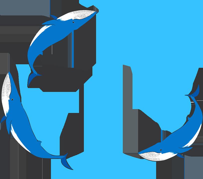 シロナガスクジラ丸フレーム(背景なし814×720)