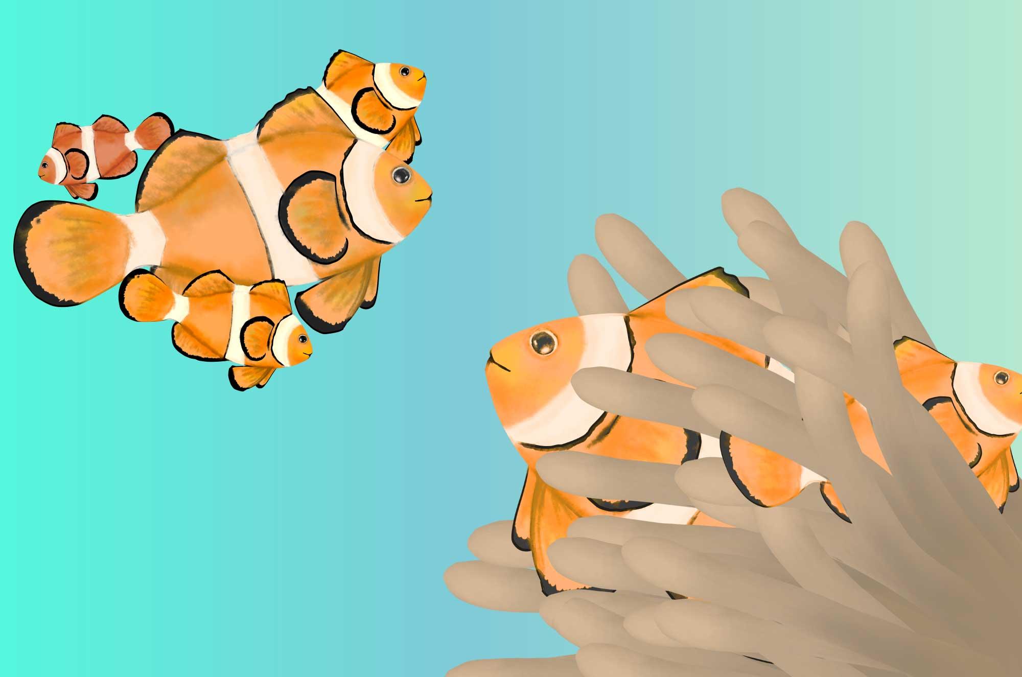 可愛いクマノミの無料イラスト - 海の魚のフリー素材
