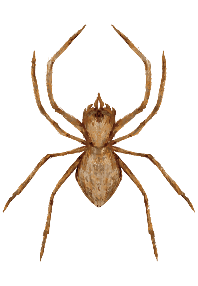 リアルな蜘蛛イラスト