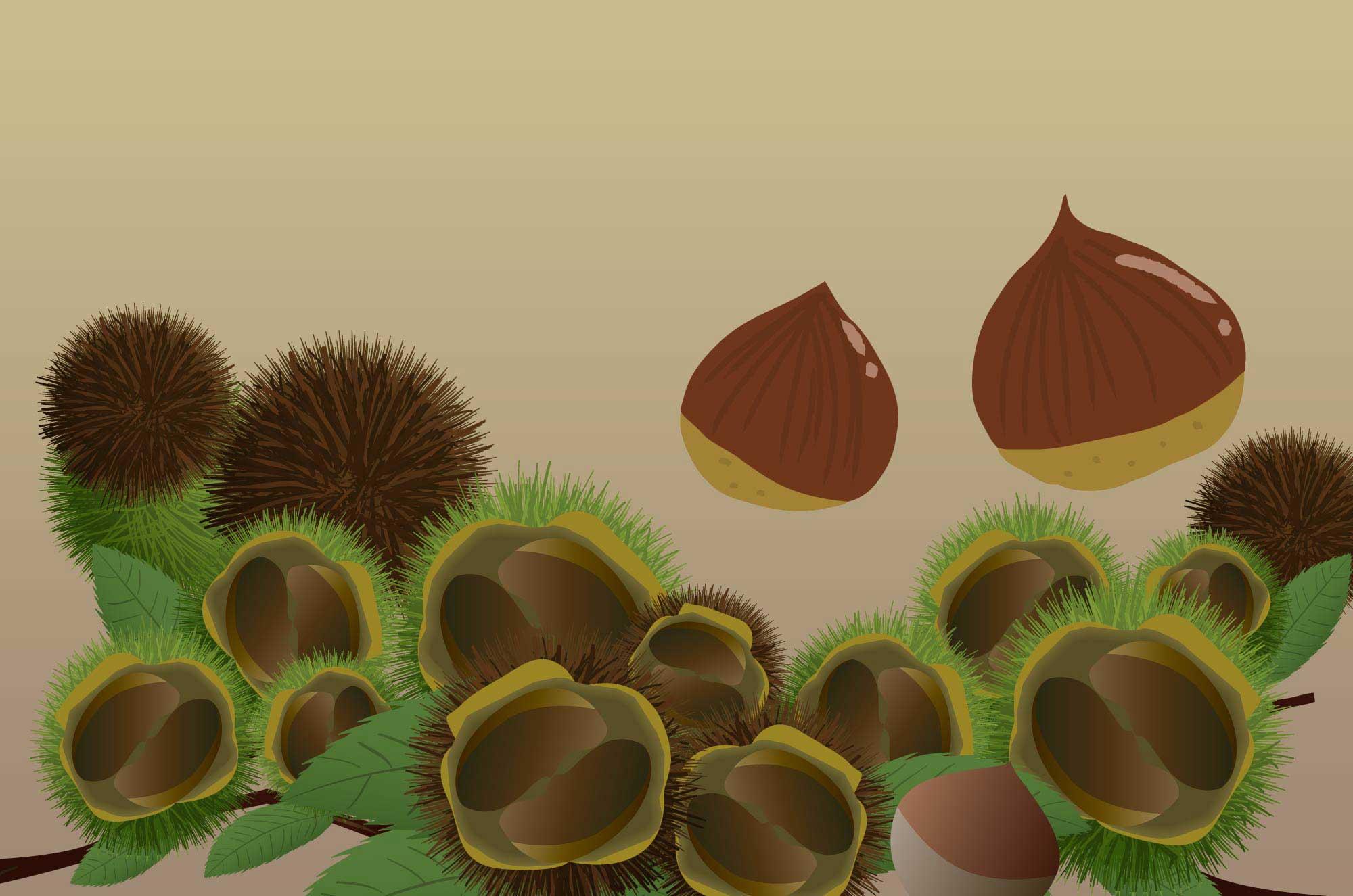 栗イラスト - テイストいっぱい可愛いフルーツ無料素材