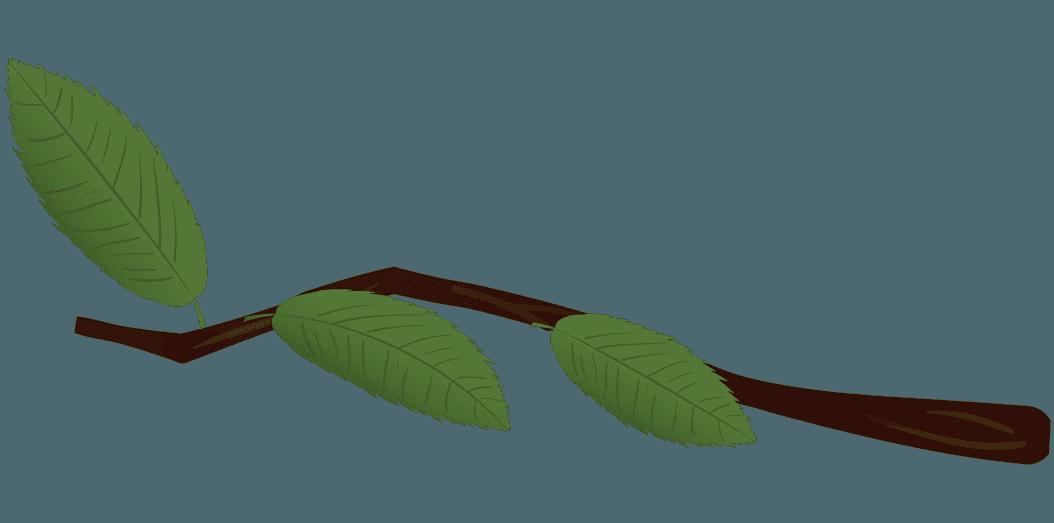 栗の木の枝イラスト