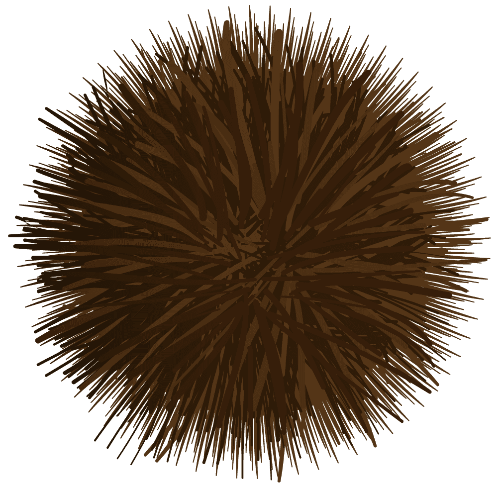 茶色いいが付きの栗イラスト