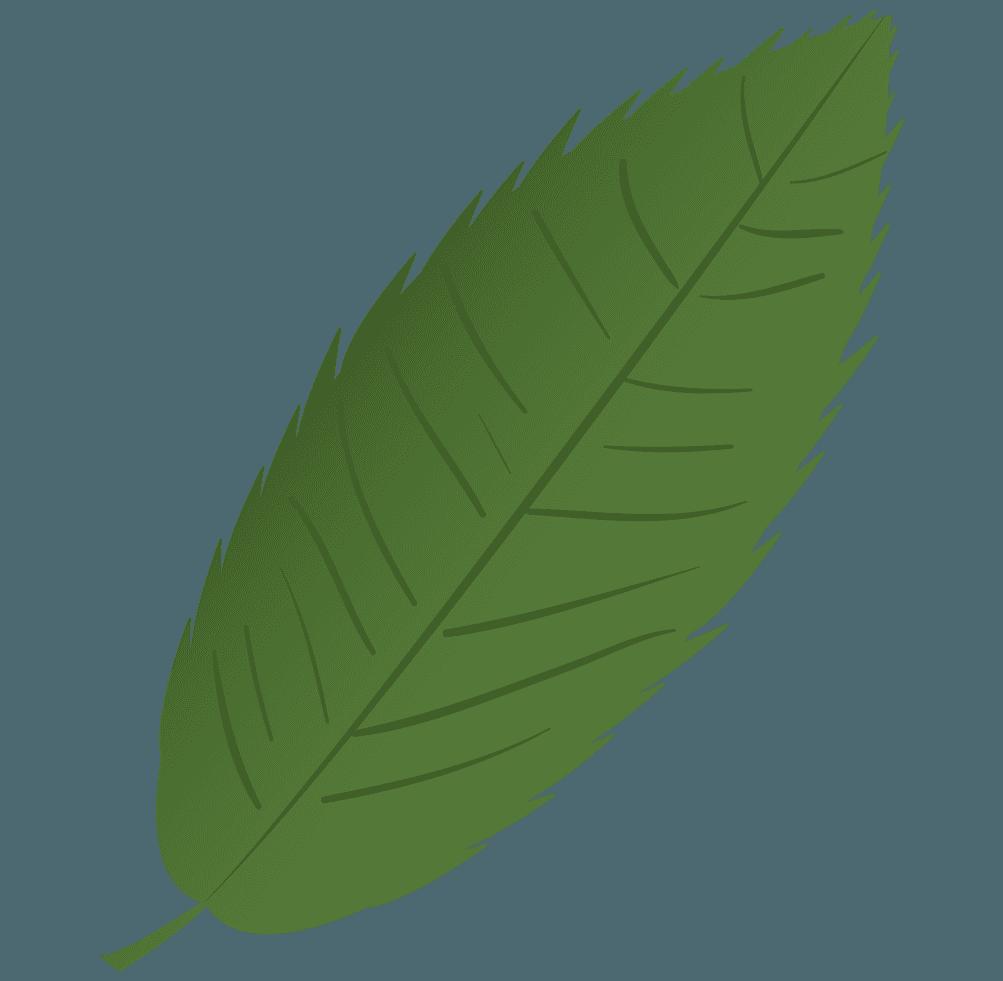 栗の葉っぱイラスト