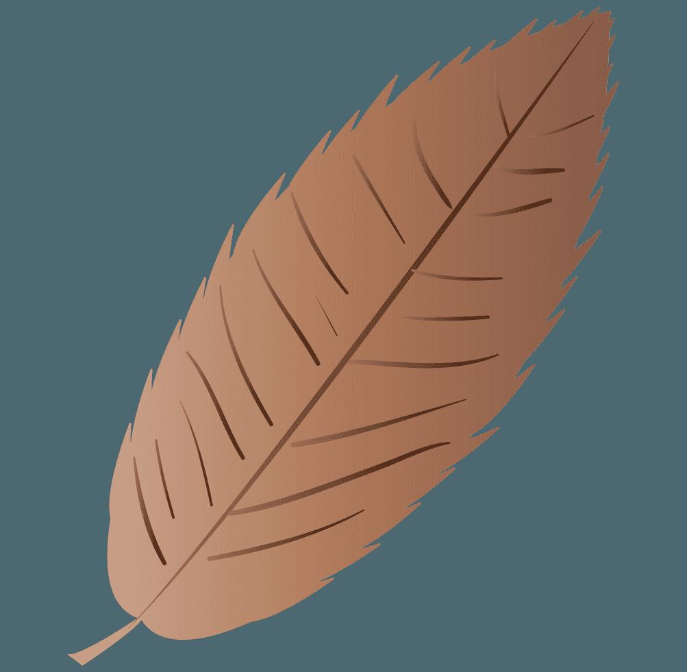 栗の枯れ葉イラスト