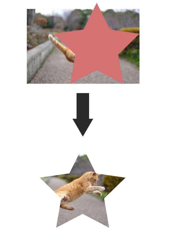 星型に切り抜かれた猫の写真