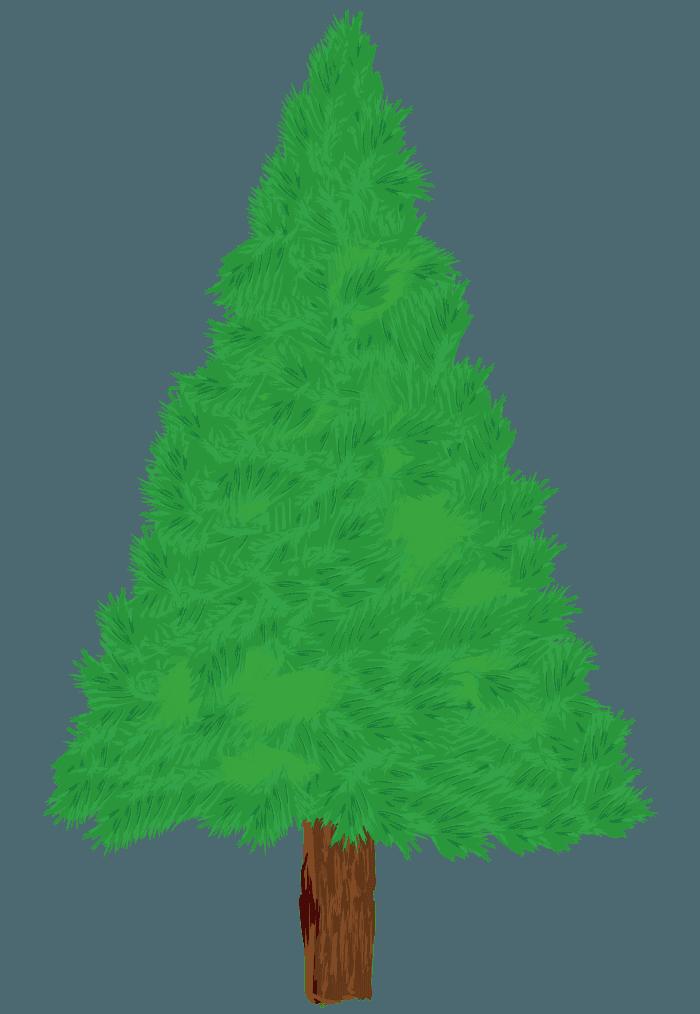 手描きの可愛いもみの木イラスト
