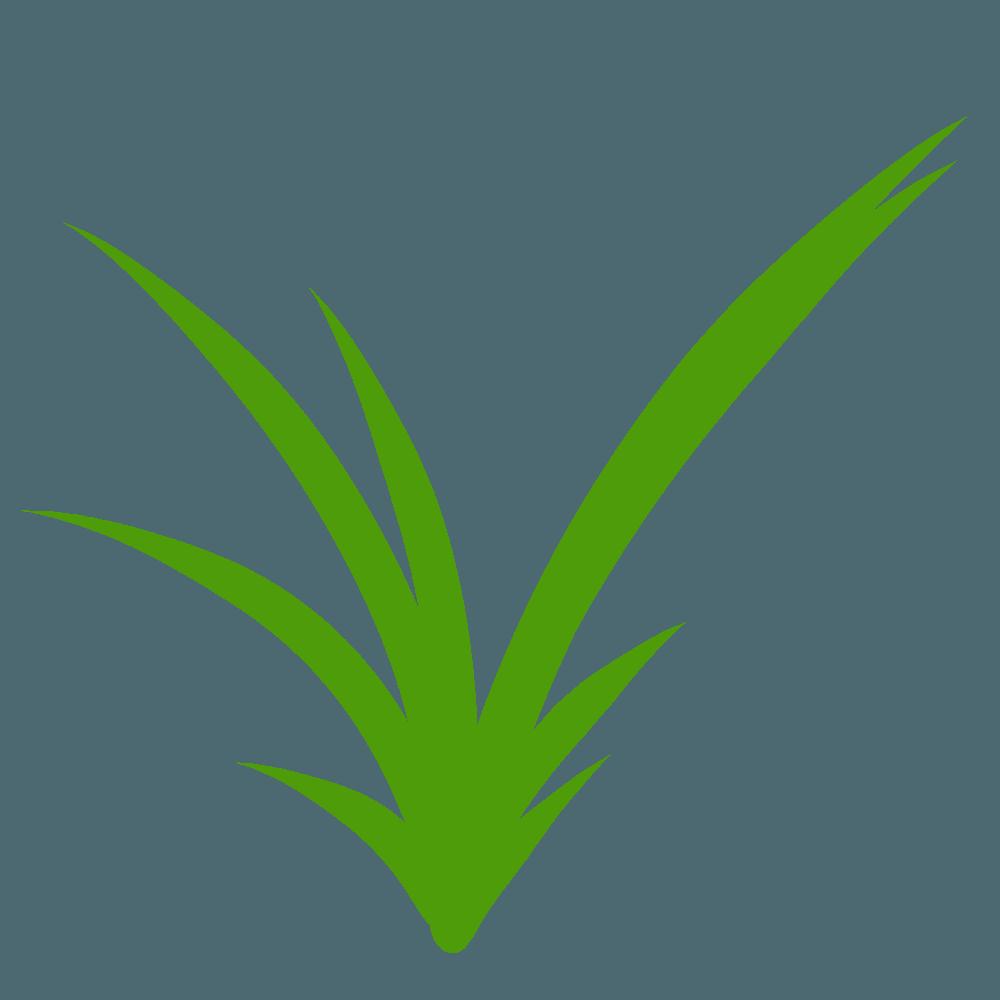 道に生える雑草イラスト