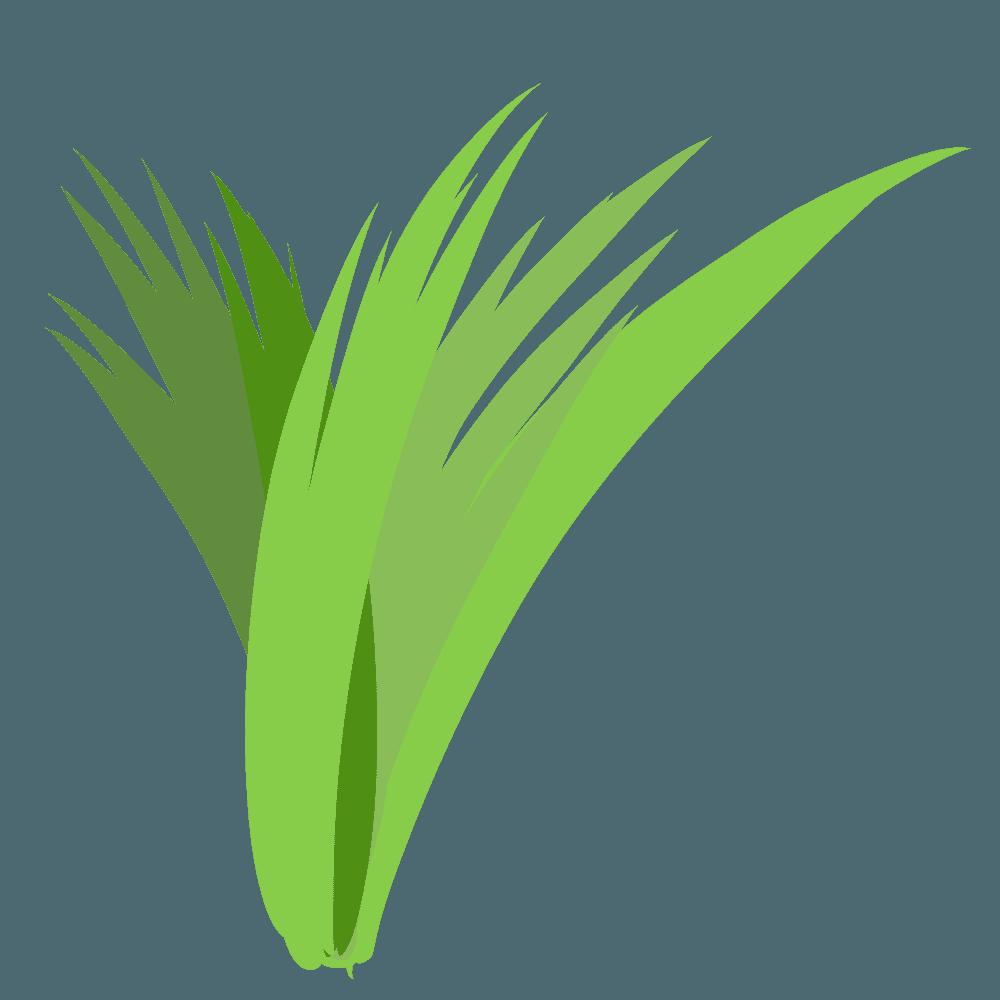 雑草の塊のイラスト