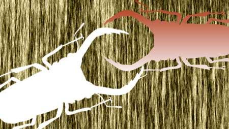 クワガタイラスト - リアル・可愛い昆虫の無料素材