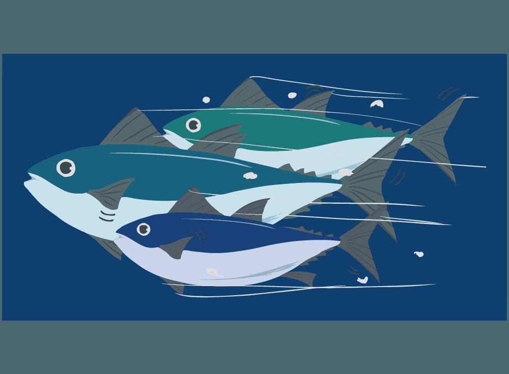 海を泳ぐマグロの群のイラスト