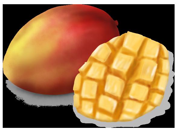 切ったマンゴーとリアルなマンゴーのイラスト