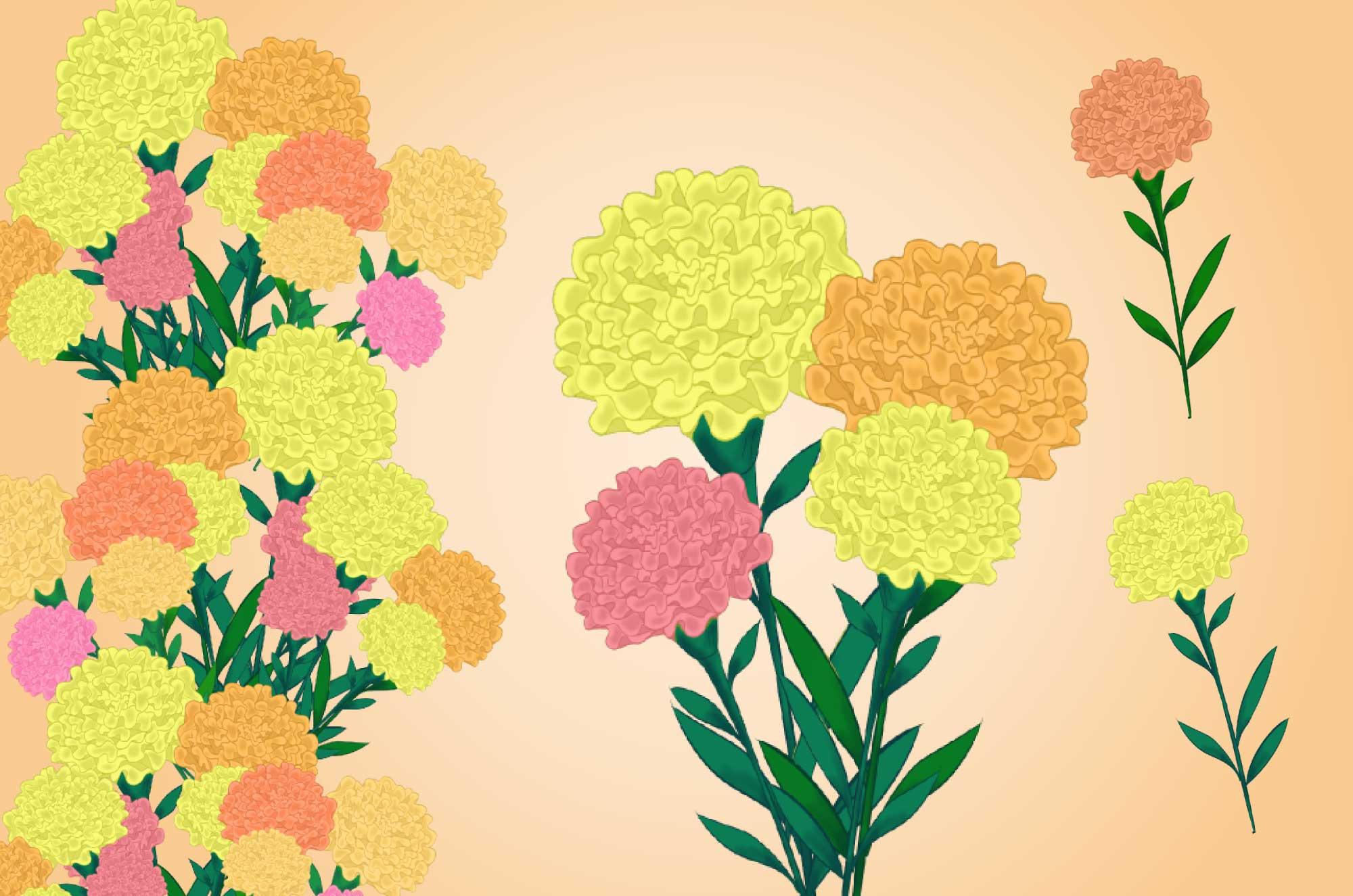 マリーゴールドの無料イラスト - 花のフリー素材