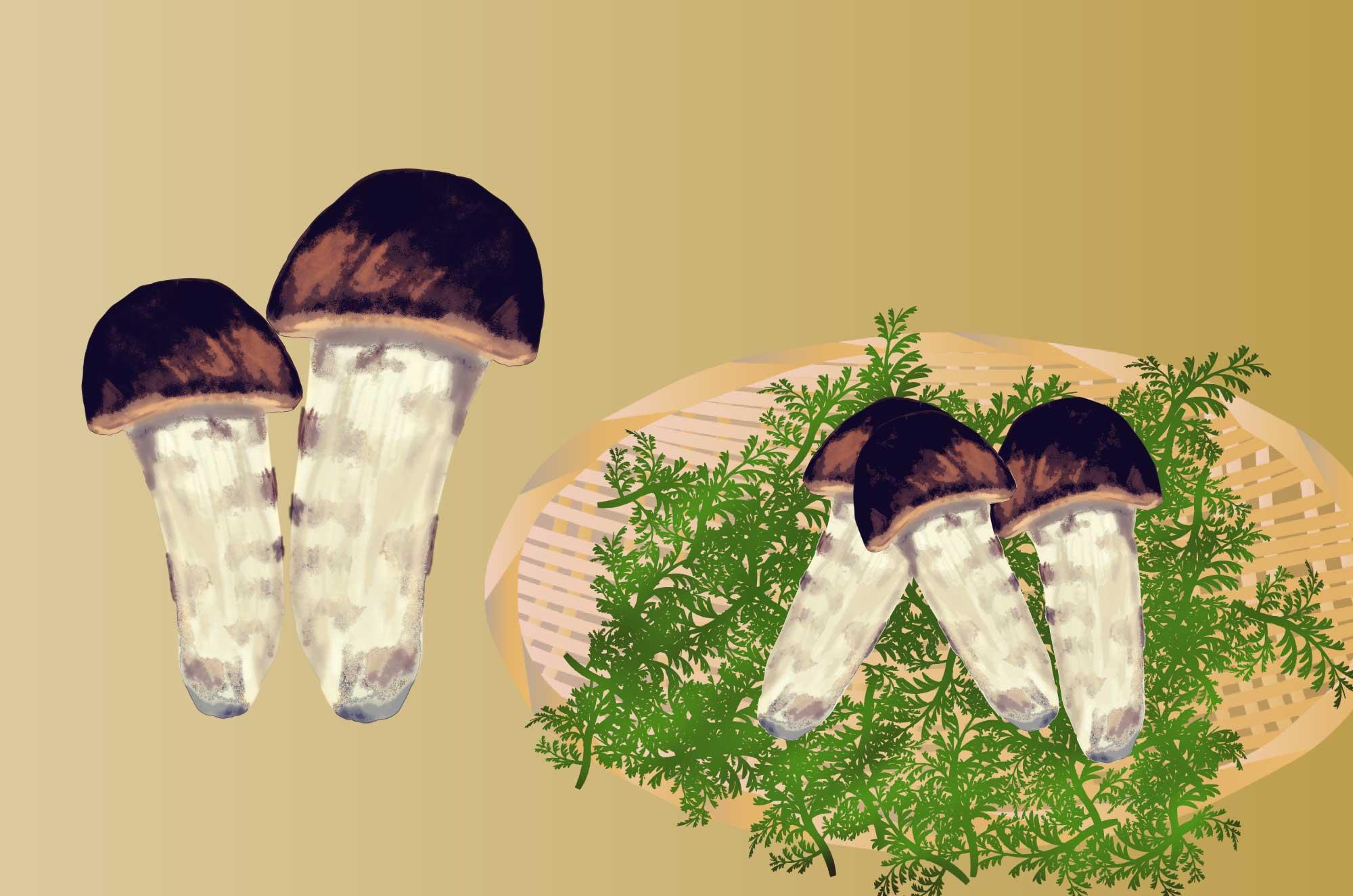 松茸の無料イラスト - 高級きのこのフリー素材